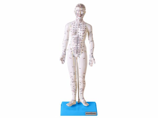 Modelo para Acupuntura Feminino com 50cm - TGD-0402 - Anatomic