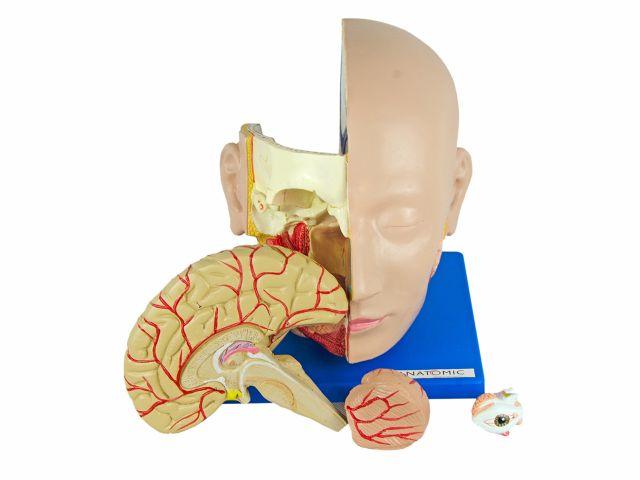 Cabeça em 4 Partes - TZJ-0300 - Anatomic